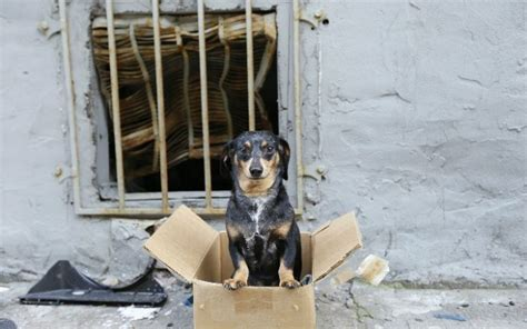 signs  animal cruelty      pets