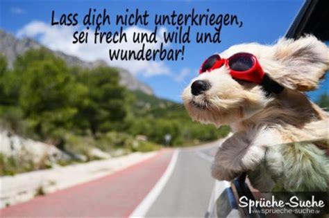 aufmunternder spruch hund mit roter sonnenbrille