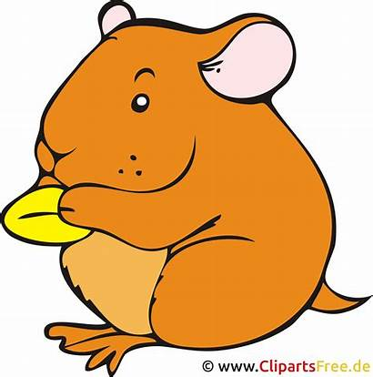 Hamster Clipart Kostenlos Clip Cartoon Bild Cliparts