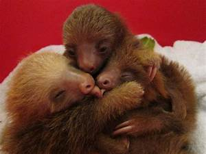 Sloth huddle.