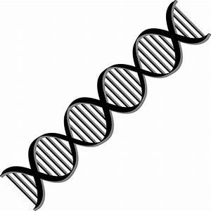 Clipart - DNA Helix Variation 2