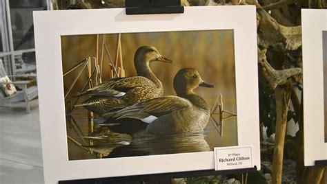 duck stamp winner unveiled washington daily news