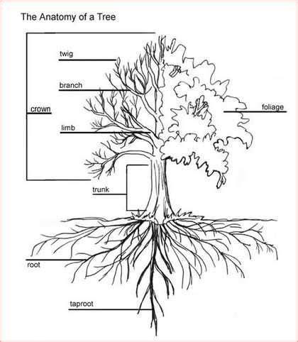 pin  daniel latorre  ecosystem metaphors tree roots