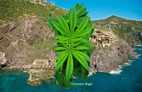laver canapé tissu sardegna fitodepurazione cannabis laveria la