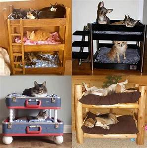 cool cat and dog beds via i love creative designs and With unusual dog beds