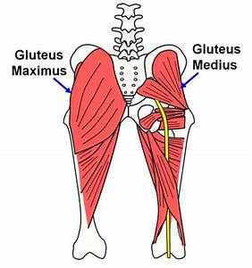 Hip Abductors  The Muscles That Stabilize Your Walk