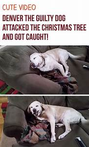 best 25 guilty dog ideas on pinterest baby laughing With the dog house denver