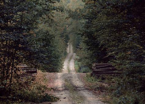 Pērk mežu visā Latvijas teritorijā - SIA Lignum Latvija