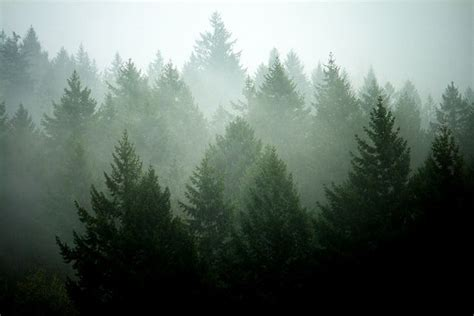 Foggy Evergreen Forest Wallpaper Pine Tree Layers By Sekkle Via Flickr Forest Pinterest About Canada Foggy Forest And