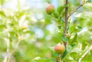 Apfelbaum Schneiden Anleitung : apfelbaum pflanzen pflege anleitung zum schneiden ~ Eleganceandgraceweddings.com Haus und Dekorationen