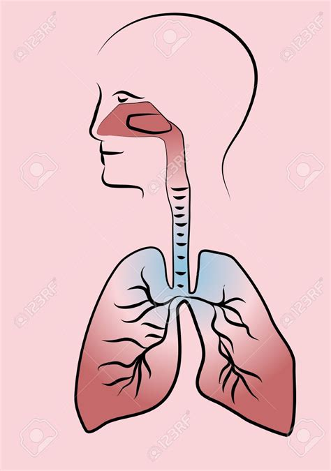 library  respiratory system images image black  white