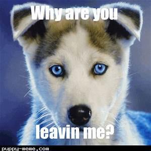Cute Sad Puppy Meme | www.pixshark.com - Images Galleries ...