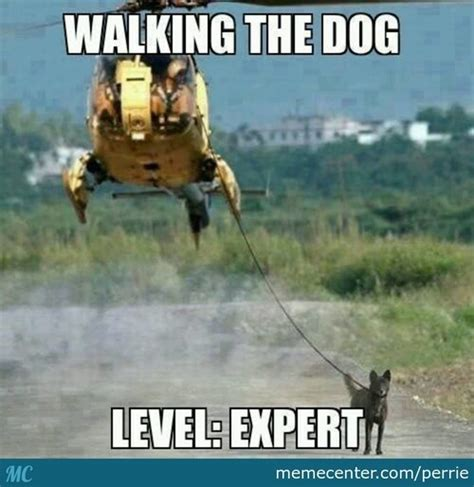 Walking Meme - never forget to walk your dog by perrie meme center