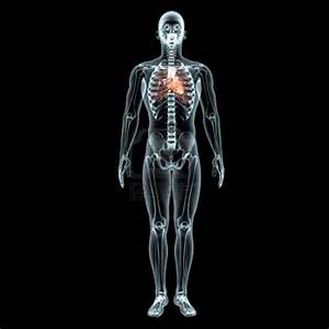 El Desarrollo Del Cuerpo Humano  Diciembre 2012