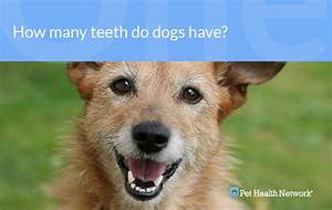 Dr  Ernie U0026 39 S Top 10 Dog Dental Questions    And His Answers