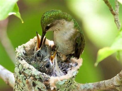 82 best images about garden wildlife on pinterest
