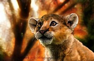The gallery for --> Real Jungle Animals Lion