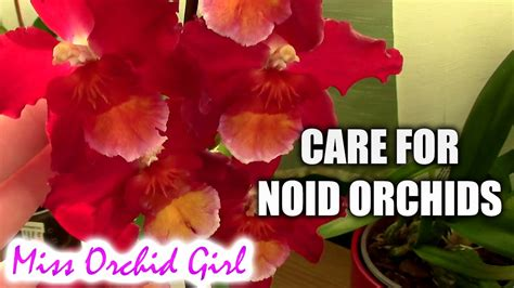 how to care for orchids noid orchids how to care for orchids with no name orchid nature