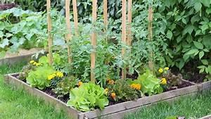 Plantes Amies Et Ennemies Au Potager : coltivare orto orto biologico come coltivare l 39 orto ~ Melissatoandfro.com Idées de Décoration