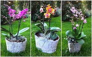 Basteln Mit Zement : kreative mitbringsel aus beton zarte orchideen massiver beton gestalten mit beton ~ Frokenaadalensverden.com Haus und Dekorationen