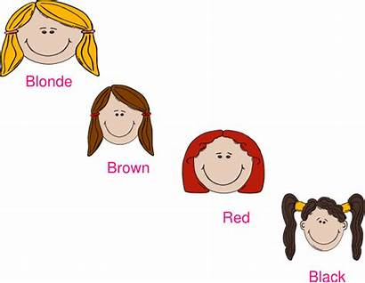 Hair Clipart Colours Clip Different Cliparts Vector
