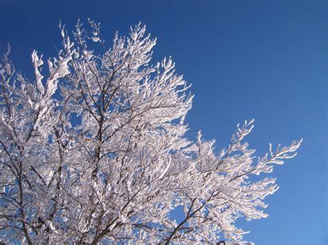 file winter tree2 jpg wikimedia commons