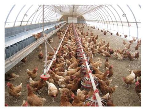what is a cage free egg tools of change