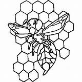 Hive Bee Coloring Sheet Insects Freecoloringsheets sketch template