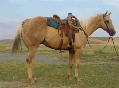 Sold Horses   Cross Three Quarter Horses