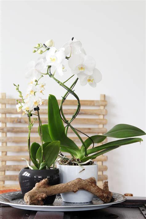 pflegeleichte zimmerpflanzen mit blüten deko orchideen free ausmalbilder