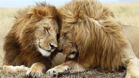 Most Beautiful Animals In The World 8inallcom