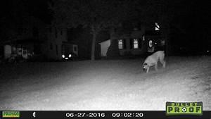 Primos Bullet Proof Trail Cam Set-up  U0026 Test