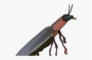 Drawn Insect Firefly