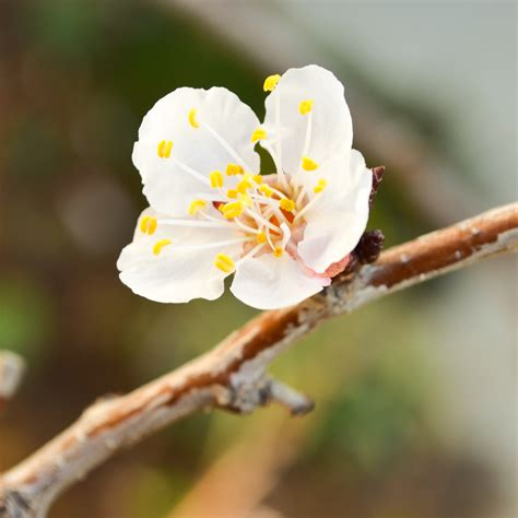 spring fruit flowers backgrounds  terry majamaki