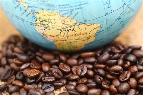All About Brazilian Coffee   Brick & Mortar Coffee