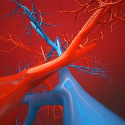anatomy   vein   jersey vein vascular center