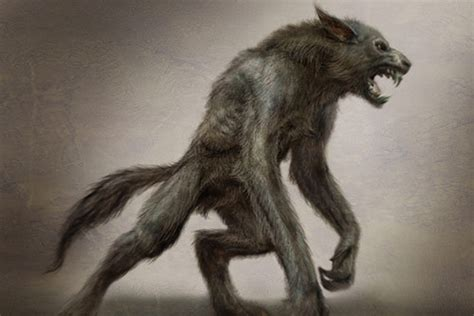 werewolf drawings werewolves photo  fanpop