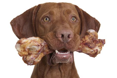 dog bone bones and dental health for pets are bones okay for pets petmd