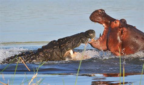 Wild Animals Are Attacking People Near A Famous Wildlife