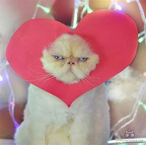 Cats Who Want To Be Your Valentine For Valentine's Day ...