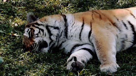 zoo louis st animals 4k