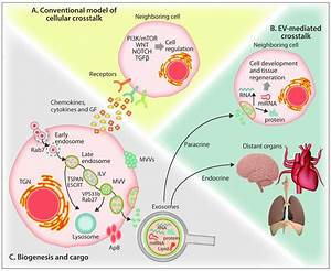 Extracellular Vesicles In The Hematopoietic
