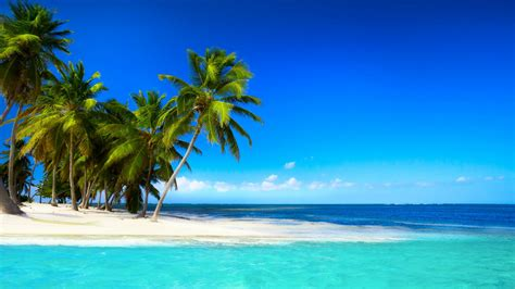 tropical beach with palm trees beautiful sky blue sea