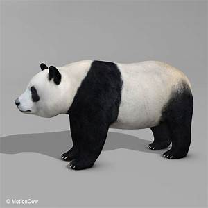 Panda Bear  U2013 Motioncow