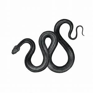 Snake - Original drawing – Pet & Dot