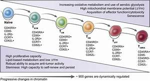 Alterations In Metabolic Characteristics Accompany T Cell