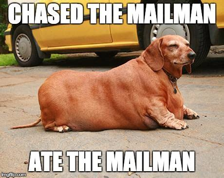Wiener Dog Meme - best 25 dachshund meme ideas on pinterest wiener dogs funny dachshund and baby dachshund