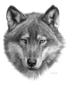 Wolf Face Drawing
