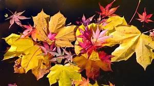 Blätter Werden Braun Und Trocken : bl tter warum werden sie im herbst braun br kinder eure startseite ~ Orissabook.com Haus und Dekorationen