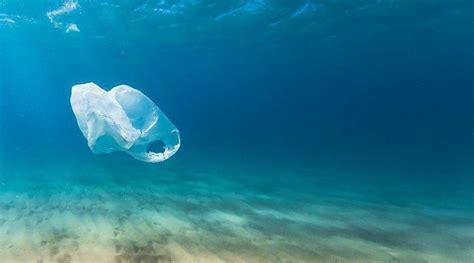 marine organisms enhance plastic pollution shred plastic
